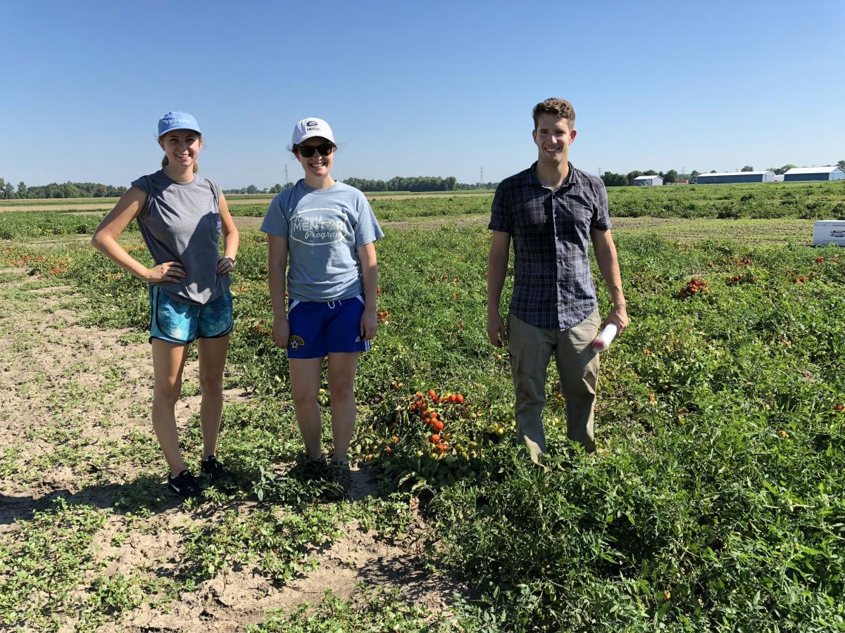 Harvesting tomatoes in Fremont, Ohio, September 2018.  L-to-R: Jenna, Mallory, Michael