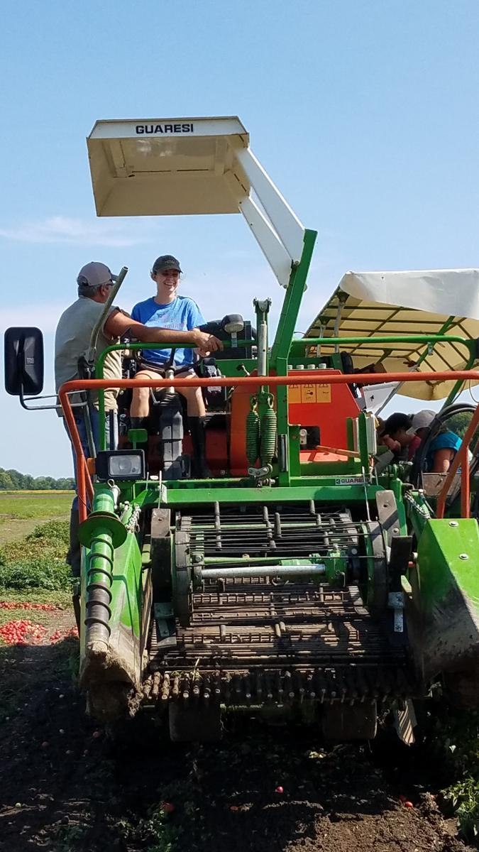 Jenna drives the tomato harvester, September 2018, Fremont, Ohio