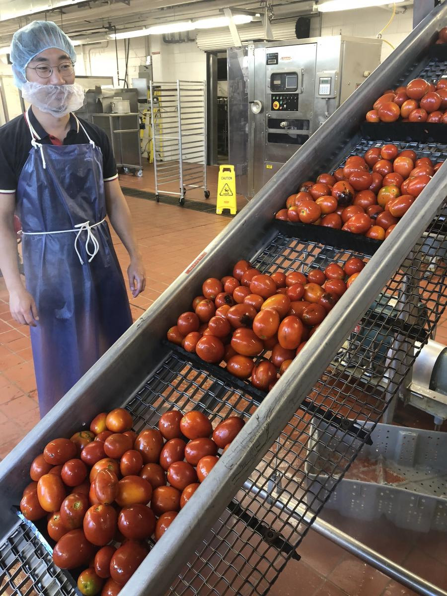 TJ enjoying processing tomatoes, September 2018, Columbus, Ohio